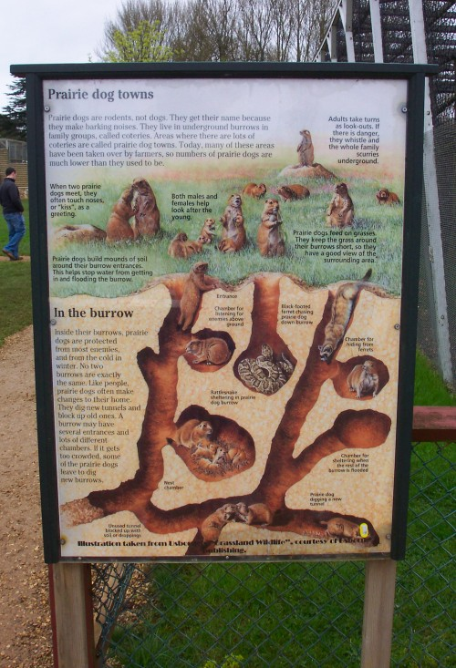 All about Prairie dogs and how they live, Twycross Zoo (2006)