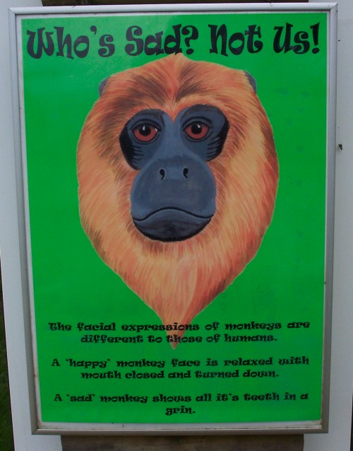 Monkeys are different from us, Twycross Zoo (2006)