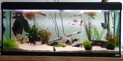 A photo of our 240 litre fish tank. UK, 2010