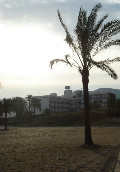 A Pretty palm tree, Spain (2006)
