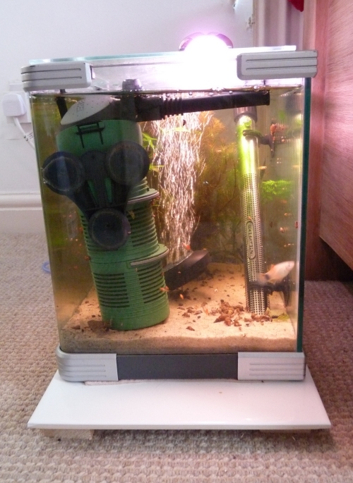 Here's my baby 20 litre tank. In here i keep Congo Frogs, Baby fry, injured or sick fish and i also breed a lot of snails in here (Trumpet snails, which puffer fish like to eat). UK, 2010