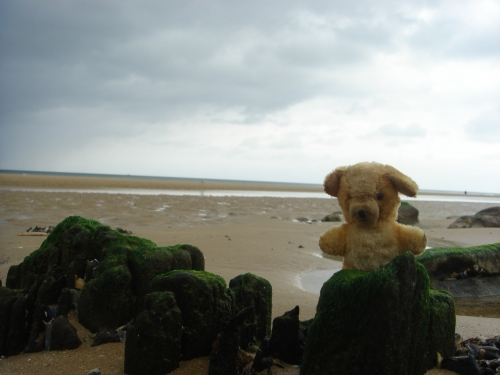 Little Ted enjoys Omaha beach, France (2006)