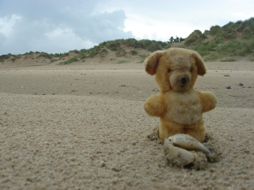 Little Ted examines a crabs claw on Utah beach, France (2006)